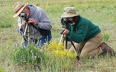 Photographers Shoot Wildflower Close-ups